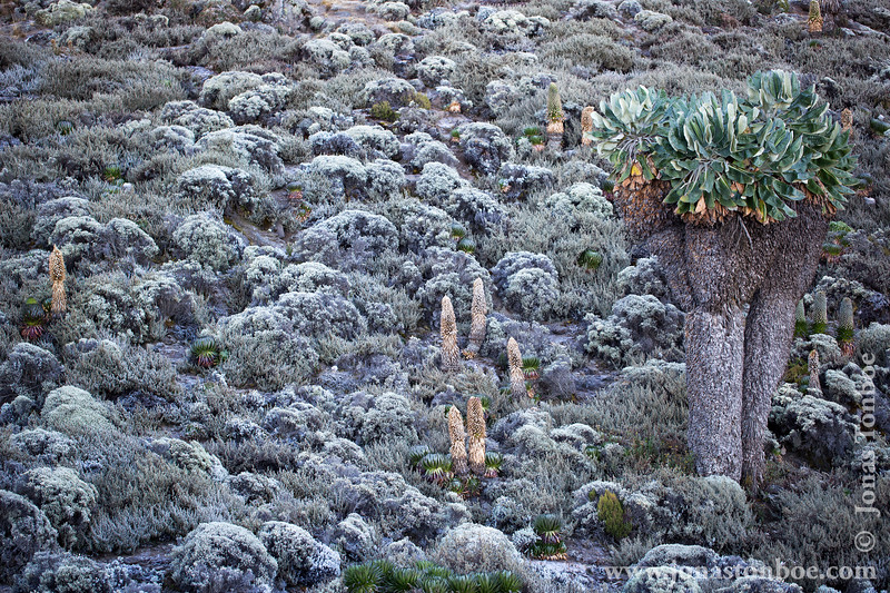 Barranco Camp at 3950 Meters - Frost Covered Vegetation