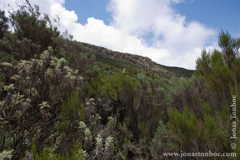 Lower Slopes of the Mountain
