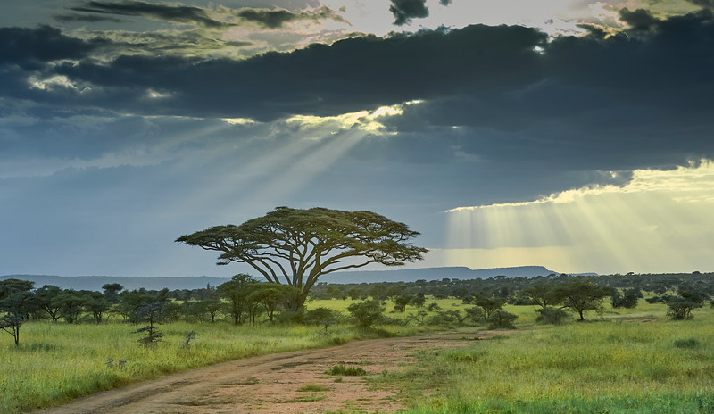 Tanzania selection 143