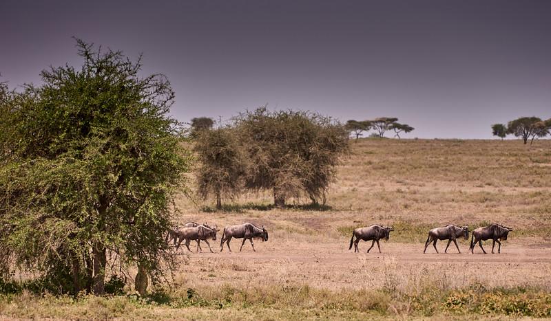 Tanzania 2013 1060