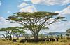 Tanzania 2013 1740