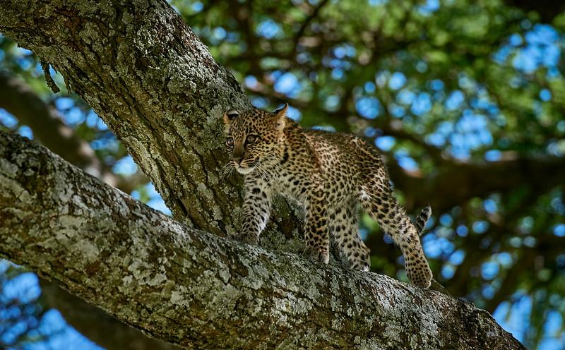 Tanzania 2013 1533