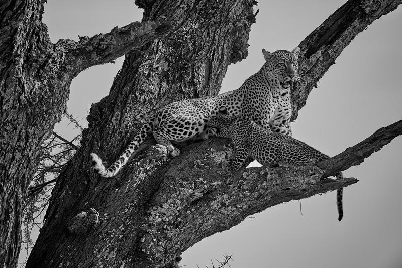 Tanzania 2013 1623 1