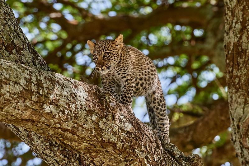 Tanzania 2013 1555