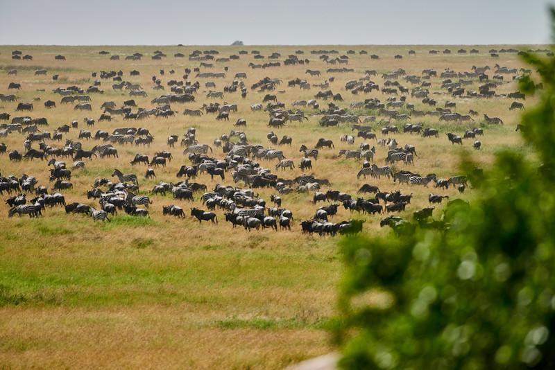 Tanzania 2013 1853