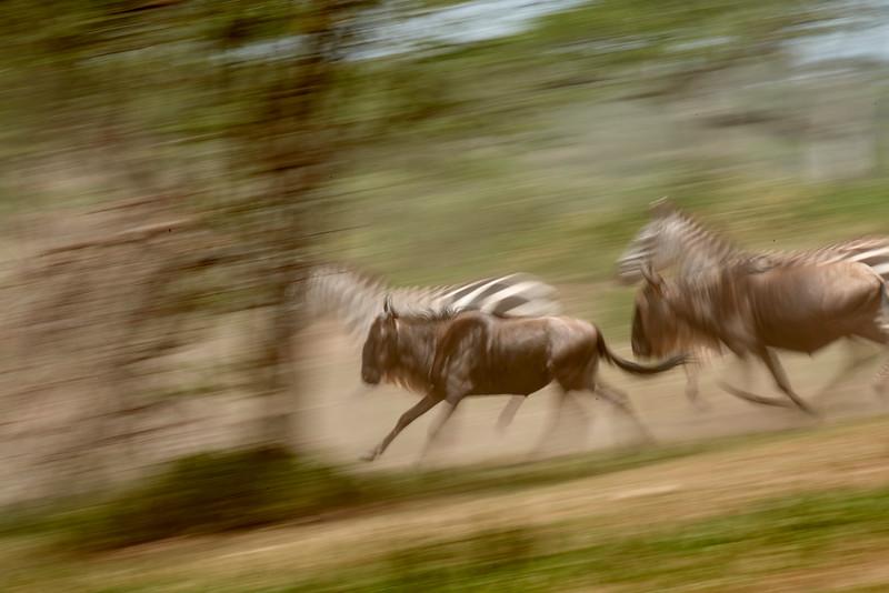Tanzania 2013 1083