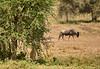 Tanzania 2013 1056