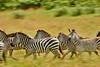 Tanzania 2013 1878