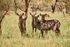 Tanzania 2013 1691