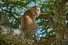 Tanzania 2013 1325