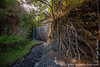 Fig Tree and Waterfall