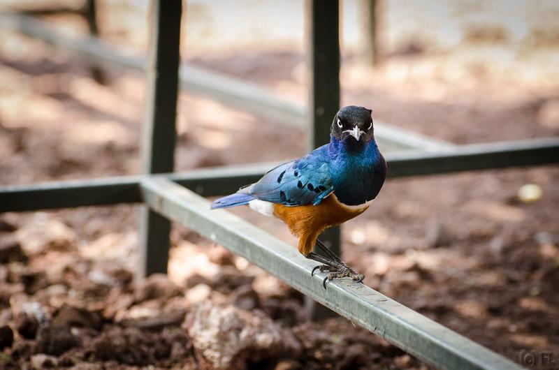 Angry birdgg