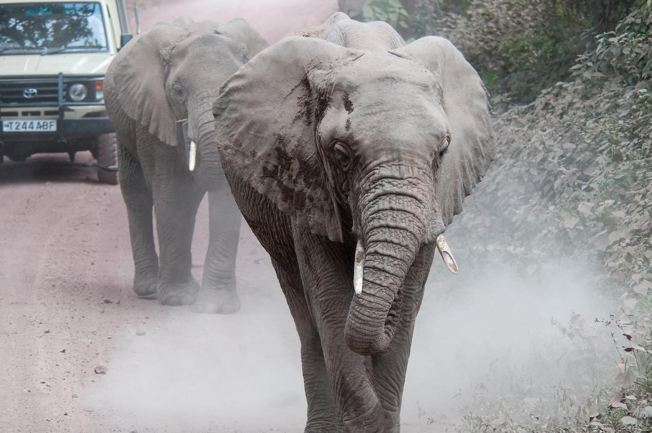 Elephants passing our truck near Lake Manyara.