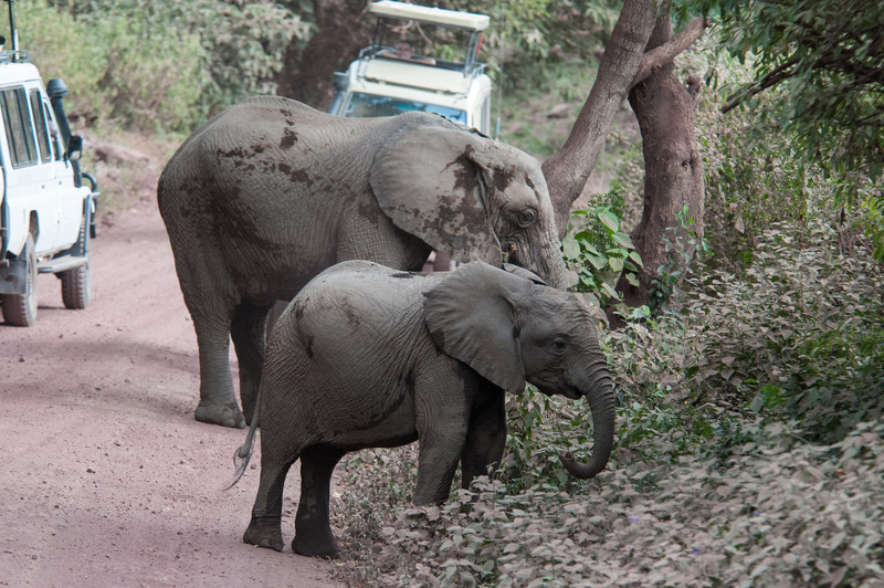 Baby and cow elephant near Lake Manyara.