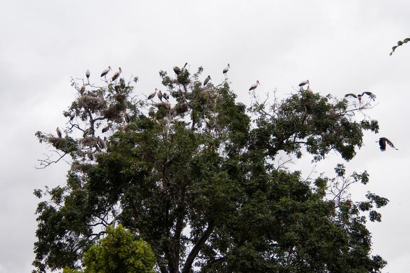 Storks at Lake Manyara.