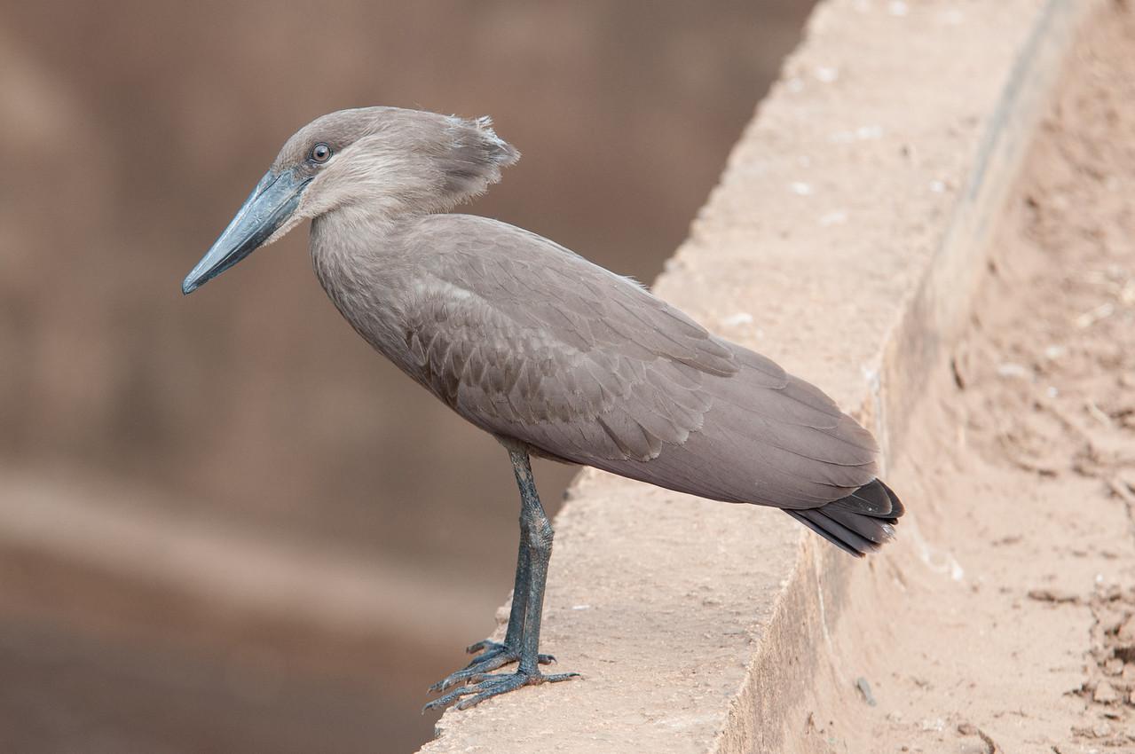 Unidentified bird.