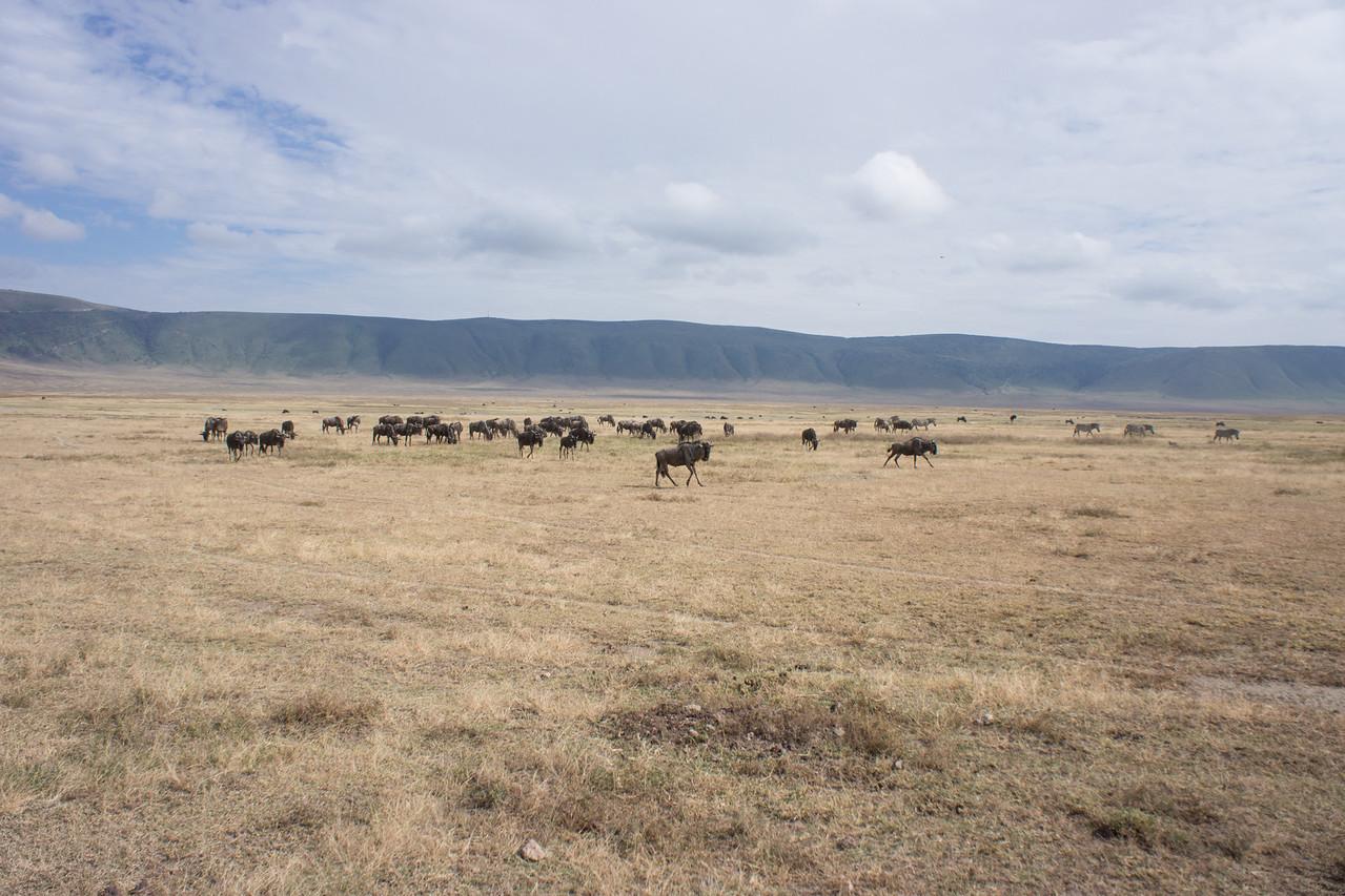 Wildebeest in the distance.
