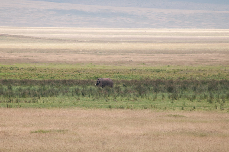 Large bull elephant in the distance