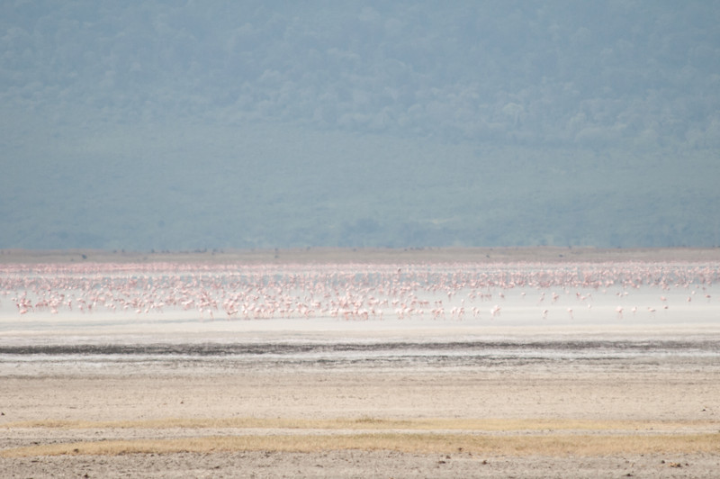 Flamingos on the lake in the distance
