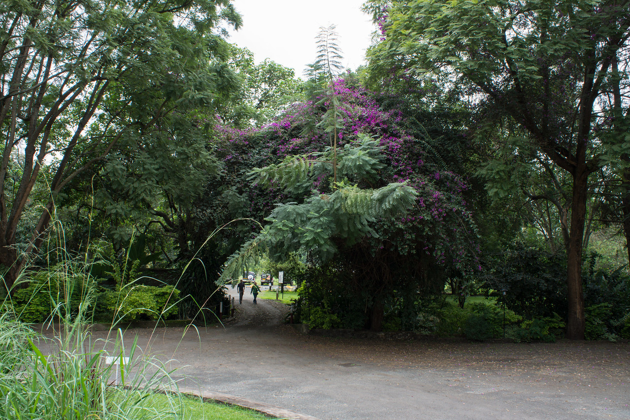 The flowering plant is a vine covering the tree.