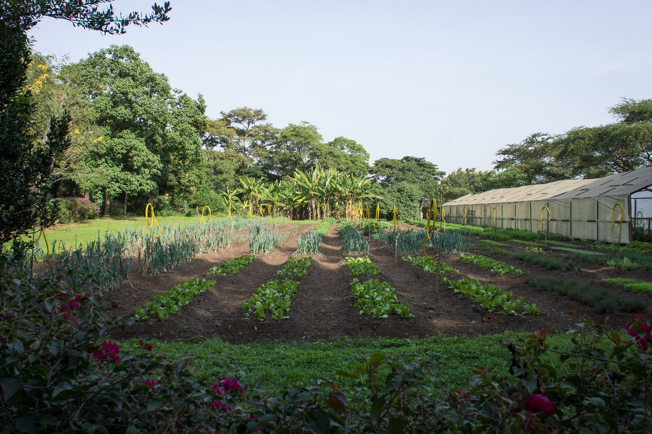 Gardens where they grown food for their dining room.
