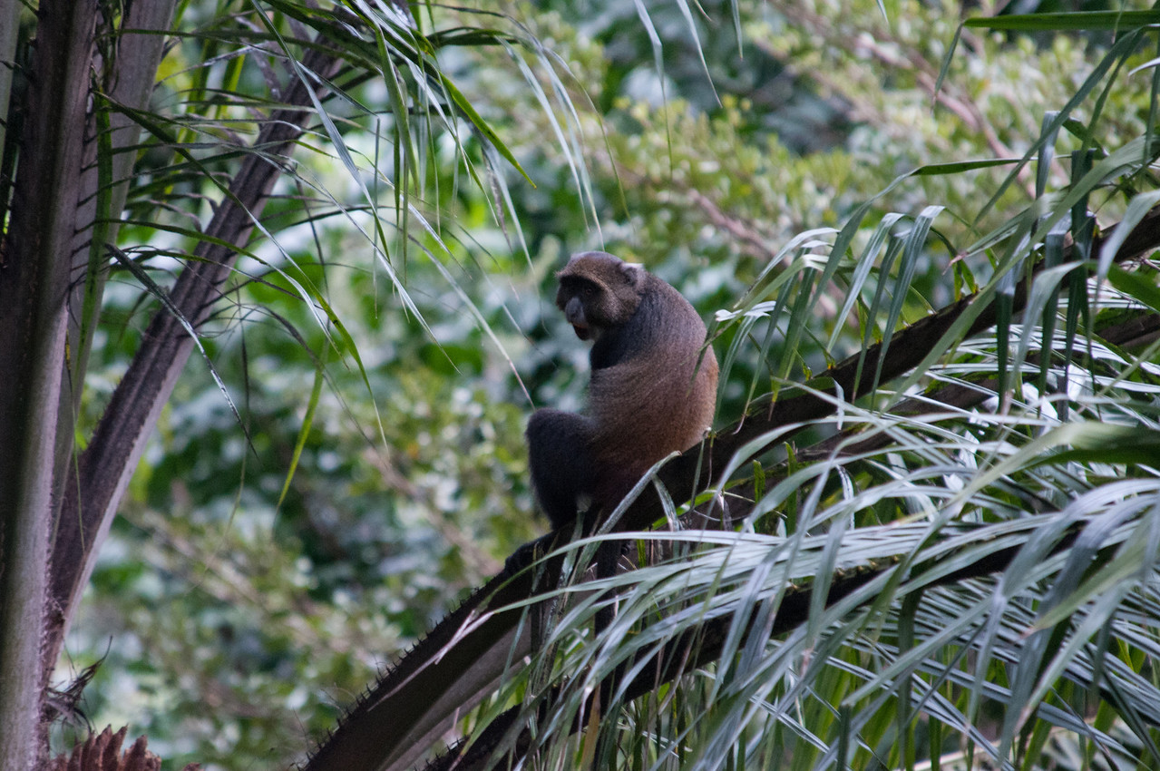 Another monkey at the Dik Dik.