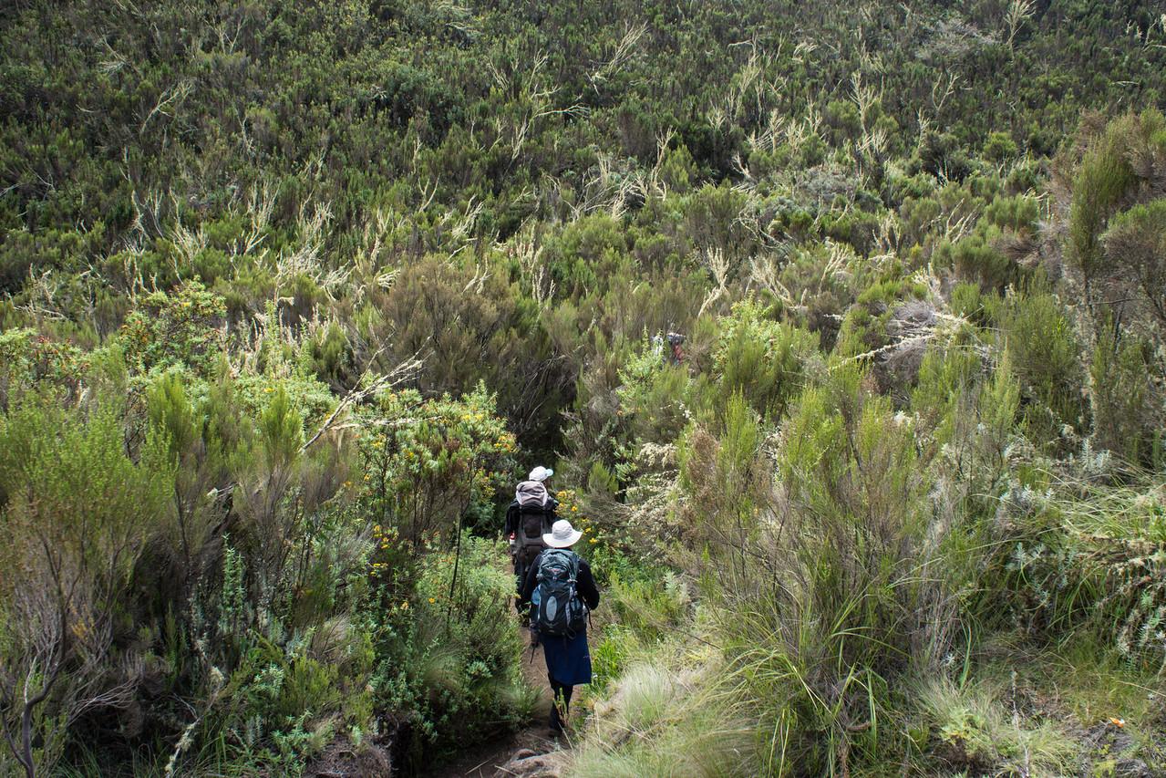Hikers desccending.