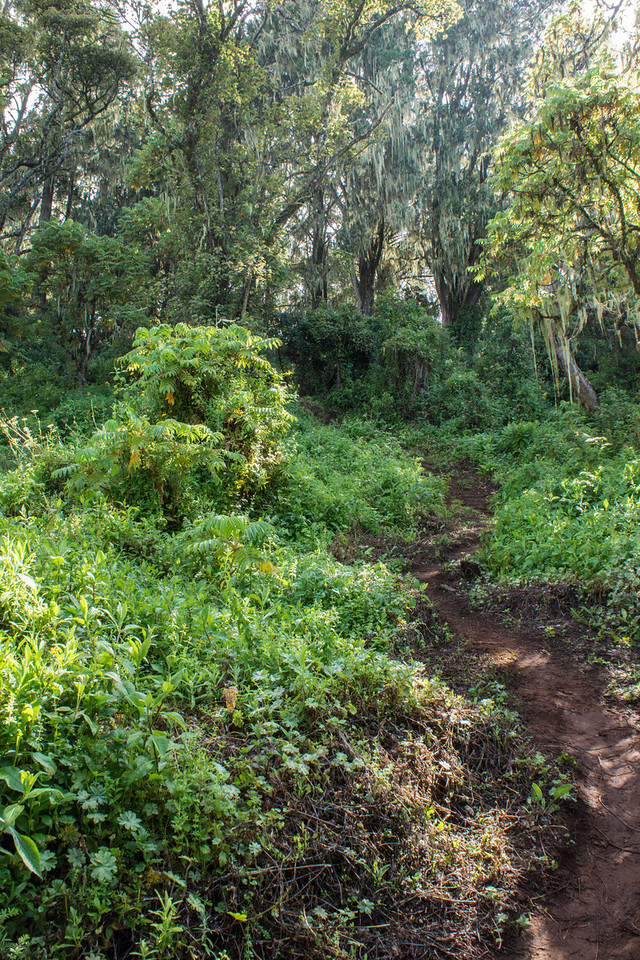 The trail was still a bit muddy.
