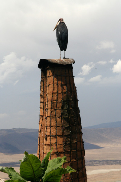 Huge bird standing on our chimney