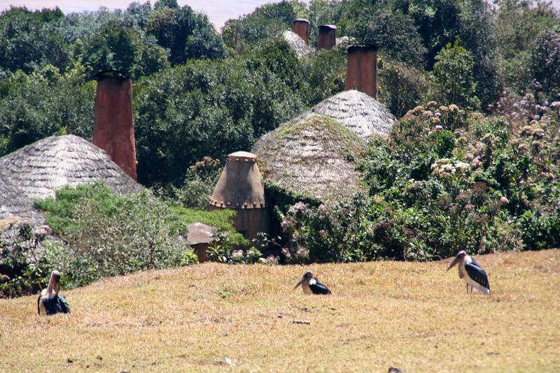 Huge birds at the Ngorongoro Camp