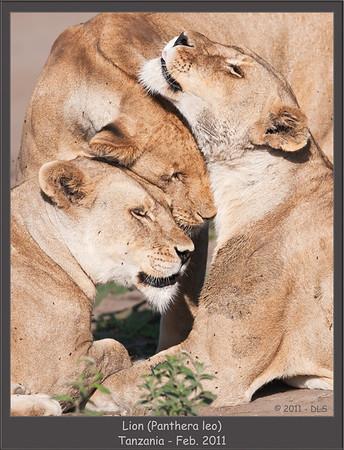 Tanzania - Mammals