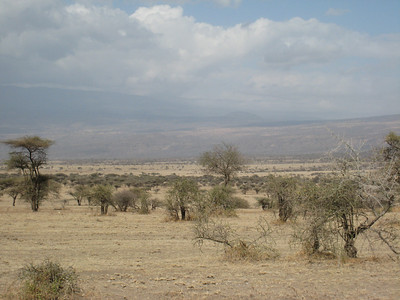 Inside the Ngorogoro Crater.