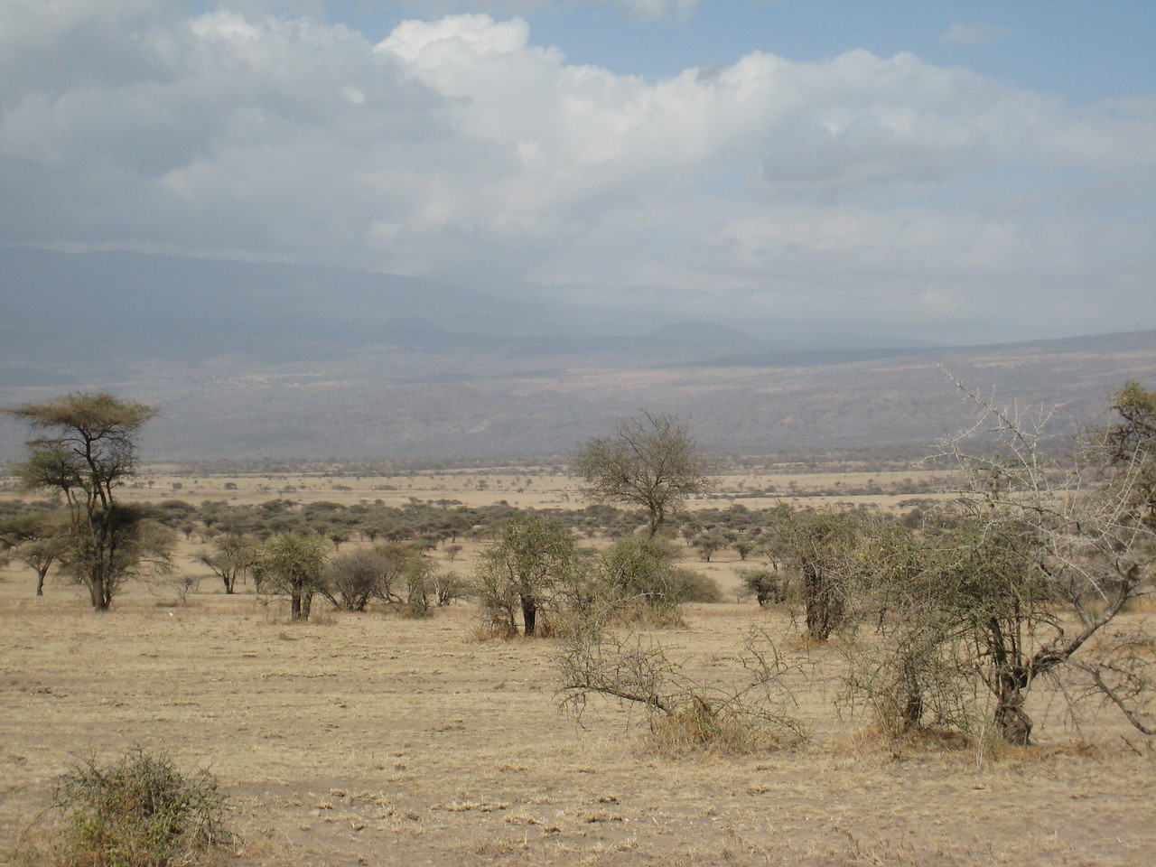 Inside the Ngorogoro Crater.