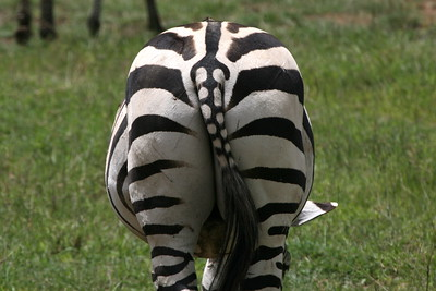 Stripes & Polka Dots!
