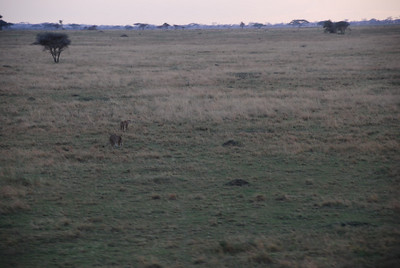 We were lucky enough to see a family of cheetahs.