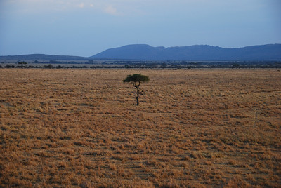 The current drought is having a drastic effect in the Serengeti.