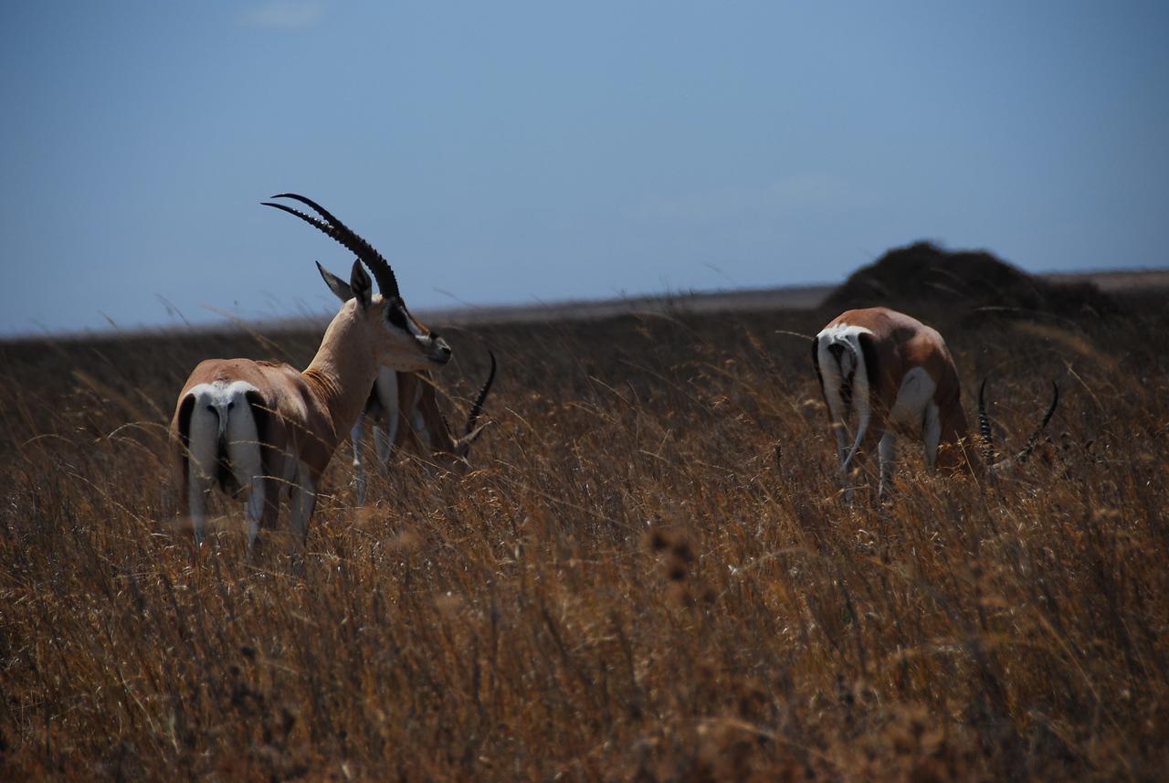 Impala, such sleek elegant animals.
