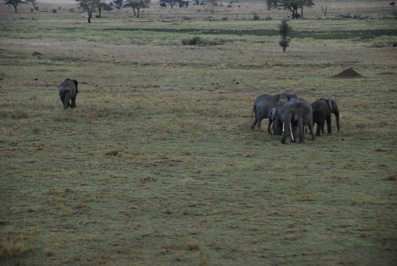 Photo taken from the balloon.  Elephant herd.  The matriach wasn't too keen on the balloon.