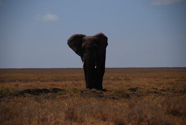 Tanzania: Serengeti