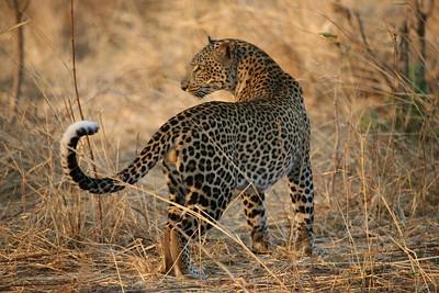 Tanzania (Southern)