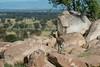 Klipspringer - Northern Serengeti