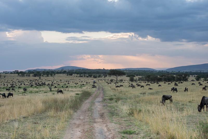 Wildebeest at Dusk - Loliondo Wildlife Preserve