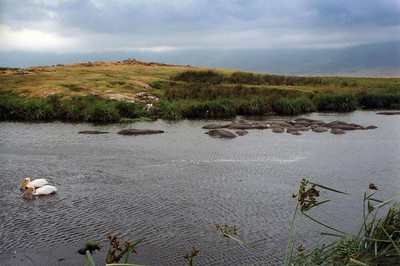 Hippo pool, Ngorongoro Crater.