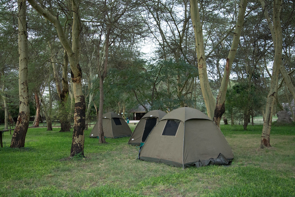Our tents beneath the fever trees (Fabaceae; Vachellia xanthophloea) at Nsya Lodge.  Fever trees are so-named because they grow in swampy areas where malaria transmission is common.