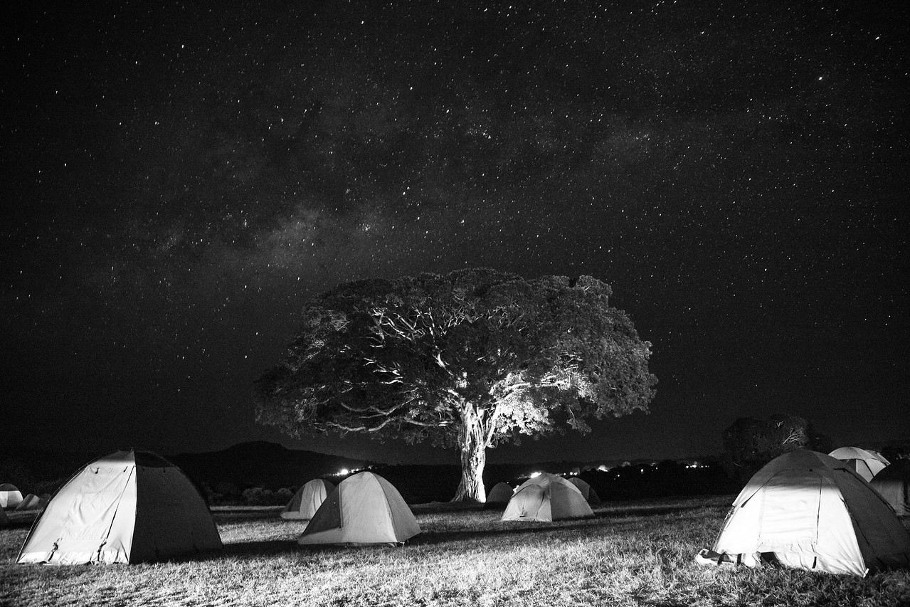 Light painting with a flashlight on a gorgeous old fig tree in our campground on the rim of Ngorongoro Crater.  In the distance are the lights of a high-end safari lodge, but other than that, this is one of the darkest, clearest and stariest places I've ever been.  I didn't have a tripod but here improvsed by putting my camera on the tire of a Land Rover parked in a perfect spot.