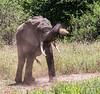 Tanz_wildlife155