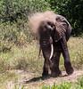 Tanz_wildlife154