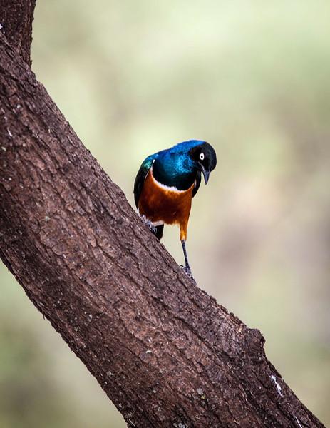 Tanz_wildlife010