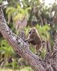 Tanz_wildlife052