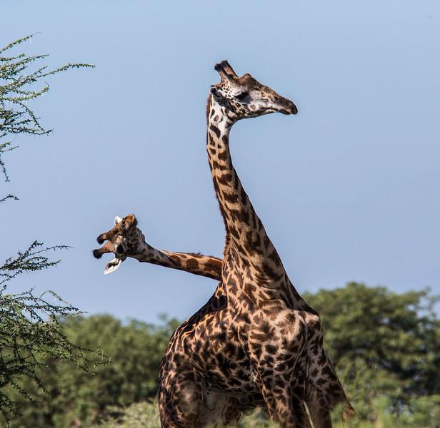 Tanz_wildlife141